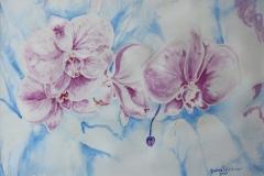 Orchidee viola Acquerello 50x35 - 2009