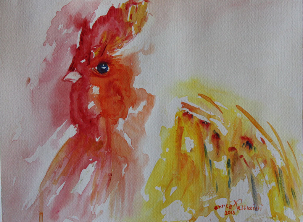 Gallo Acquerello 24x32 - 2015