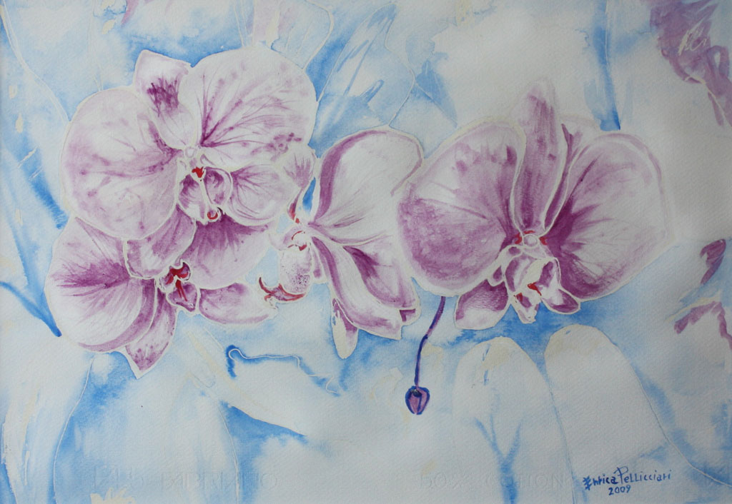 Orchidee viola Acquerello 50x35 - 2009